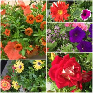 2017 flower collage